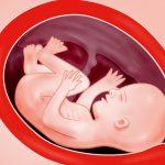 Zwangerschap week 27